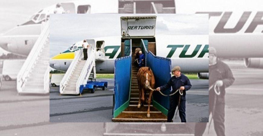 Pasos a seguir para el transporte internacional de caballos