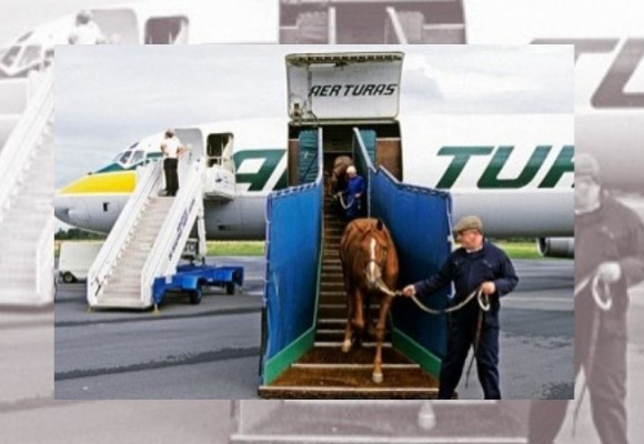 Steps to follow for international horse transport